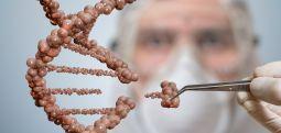 HABER ANALİZ | GDO'lu ürünler geride kalıyor, gen teknolojisi yeni ufuklar vaat ediyor..