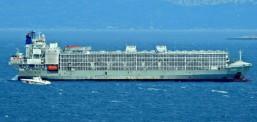 Şarbonlu gemideki hayvanlar Bandırma'ya boşaltılmış