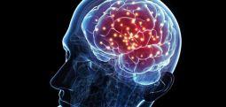 Yeni keşif: Bakın beyin kaş yaşına kadar yeni hücre üretebiliyor