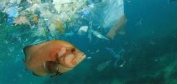 Deri në vitin 2050 në dete do të ketë më shumë plastikë sesa peshq