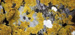 Mars'ta bile canlı kalabiliyorlar: İşte dünyanın en dayanıklı bitkileri