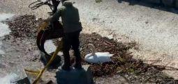 Türkiye'de 800 bebek hapiste İsviçre kuğu yumurtaları için seferber