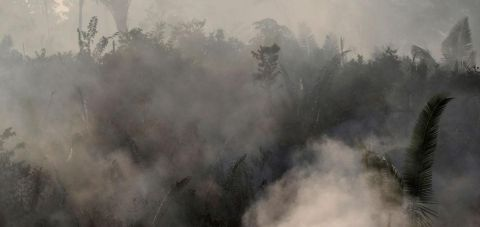 Без Амазонската прашума би се соочиле со катастрофа од невидени размери