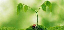 Bitkiler saldırı anında birbirleriyle haberleşiyormuş