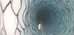 NASA uzmanları, Antarktika'da buzulun metrelerce altında yaşayan karides benzeri bir canlı keşfetti