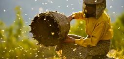 """Filmi """"Honeyland"""" nga Maqedonia me dy nominime për çmimin """"Oskar"""""""