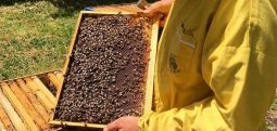 Ќе се разгледа барањето на пчеларите, засега и за нив останува забраната за движење