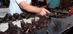 Çin'de koronavirüsün ilk tespit edildiği vahşi hayvan pazarları yeniden açıldı