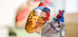Shkaqet kryesore të problemeve të zemrës