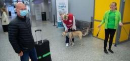 Aeroporti i Helsinkit përdor qentë për të nuhatur dhe detektuar pasagjerët, që mund të jenë të infektuar me coronavirus